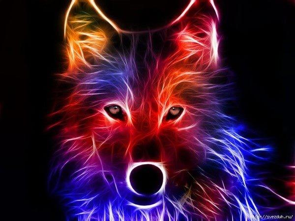 Loup en couleurs