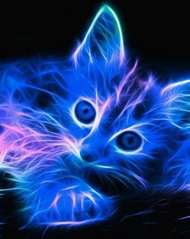 Chat au couleurs bleu