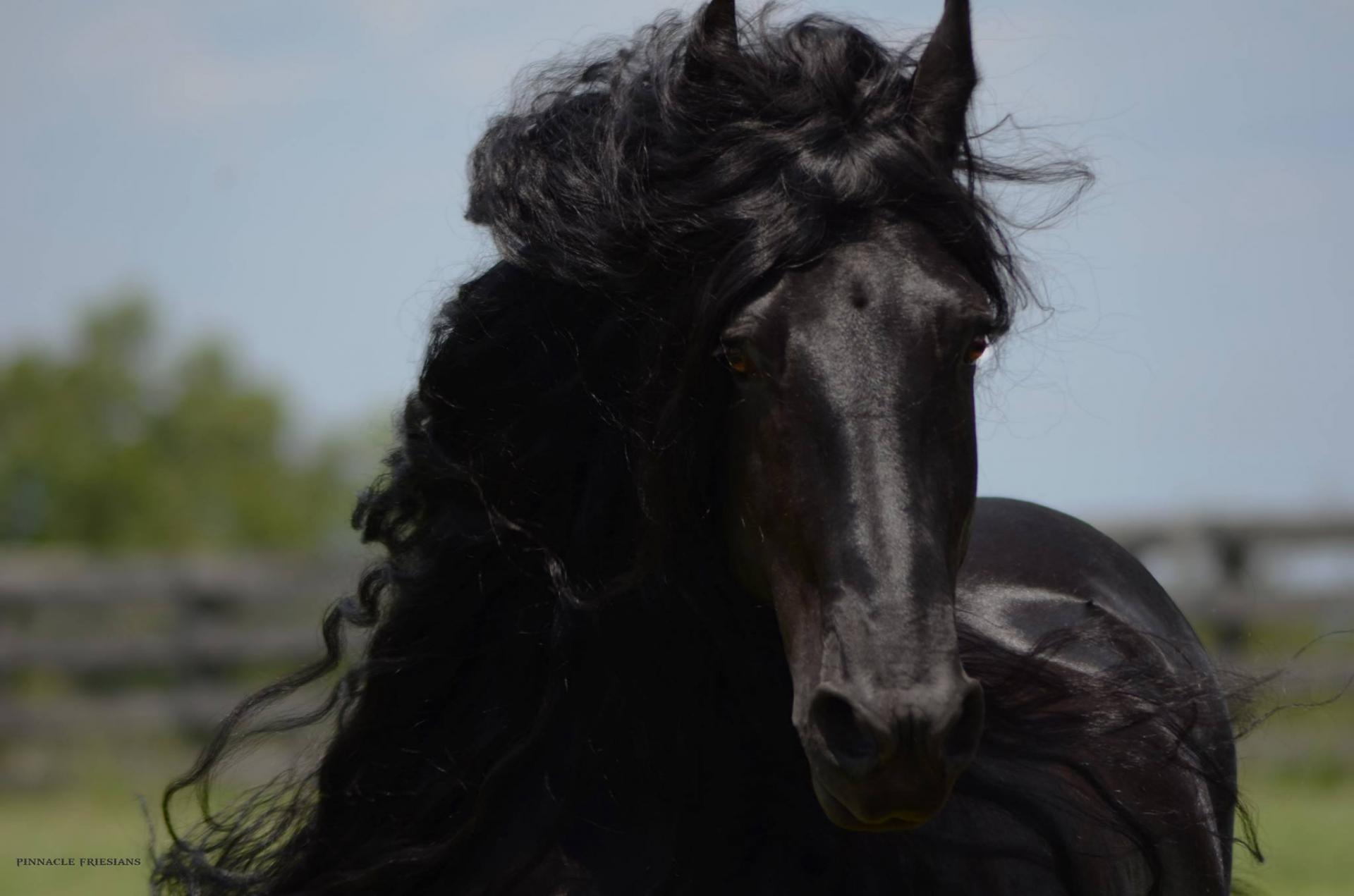 Un Cheval Noir